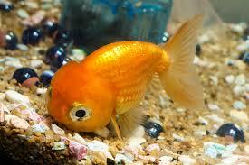 cute baby clown fish. Brilliant Fish And Cute Baby Clown Fish T