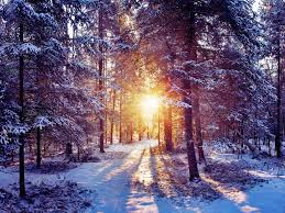 Forests Winter Sunrise Forest Nature Cool Wallpapers for HD 169
