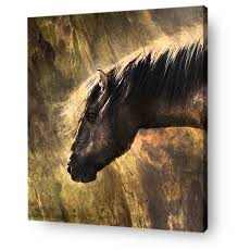 horse wall art canvas print portrait of wild horse on wood on wild horses wall art with girl with horse in mountains at sunset canvas print