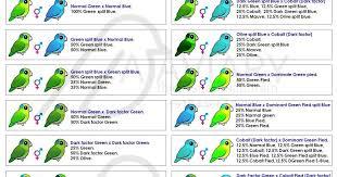 47 Proper Parrotlet Mutation Chart