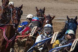 horse rider insurance quotes raipurnews
