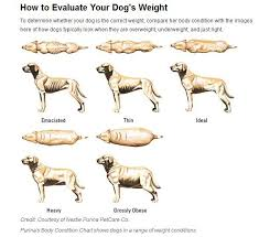 Do Bad People Raise Thin Dogs Dog Weight Overweight Dog