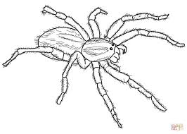 Small Picture Carolina Wolf Spider coloring page Free Printable Coloring Pages