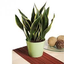 cool indoor plants low light best office plants no sunlight