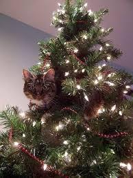 Les beaux sapins de Noël Images?q=tbn:ANd9GcRM3bmlNlxUReDuB-3SJKbWK-QDbO-UnxKK48VoM63PmZzSHvwY