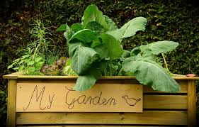 square foot gardening a how to guide