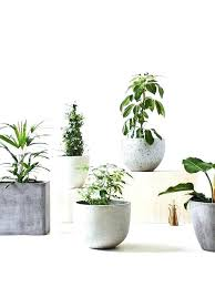 extra large indoor flower pots plant pots from left to right extra large indoor flower pots plant pots from left to right styling with concrete planters and