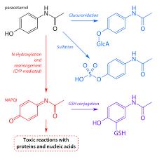Paracetamol Poisoning Wikiwand