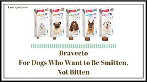 Bravecto: For Dogs Who Want to Be Smitten, Not Bitten | CertaPet