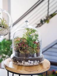create your own living terrarium