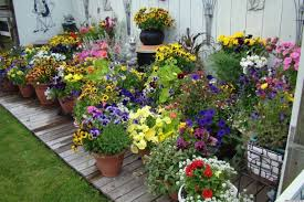 container gardening for beginners. 10 Pretty Container Gardens That Are Perfect For Any Home (PHOTOS) | HuffPost Gardening Beginners