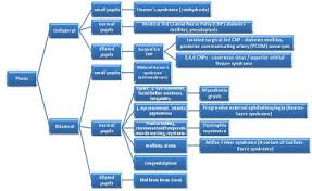 Ptosis Chart Krays Med Tips Ptosis Flow Chart