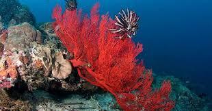 """Képtalálat a következőre: """"coral"""""""