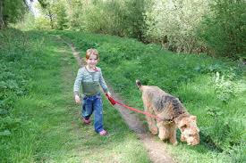 The Tails Of Harry And Cassidy The Airedales