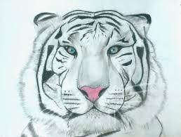 Tigre Blanc Barbar Art