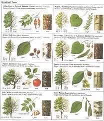 Identification Chart For Leaves 78 Unusual Tree Bark Chart