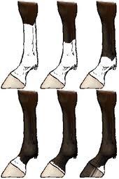 Horse Markings Wikipedia