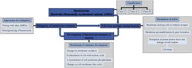 Bacteria Classification Bacteriocins Classification Synthesis Mechanism Of Action