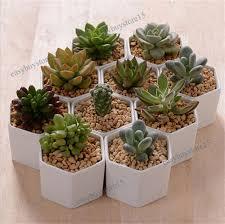 1x Cute White Ceramic Succulent Planter Miniature Flower Pots Garden  Planter Pot