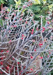 some trees and shrubs like to be cut back now and some prefer late winter and for some either is fine if you have particular questions about your plant