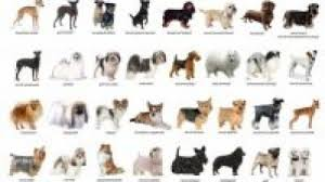 names of dog breed breed dogs spinningpetsyarn