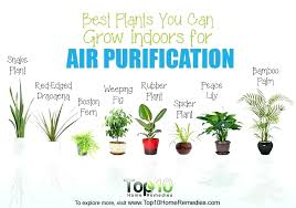 best indoor plants for office. Good Office Plants Best Indoor You Can Grow Indoors For Air Purification Top A