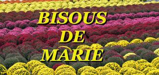 """Résultat de recherche d'images pour """"bisous chrysanthèmes"""""""