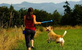 Image result for dogs and ball launcher images