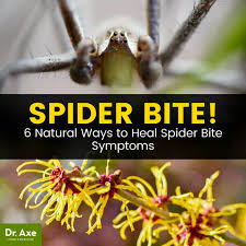 Spider Bite Symptoms + How & When to Treat Them at Home - Dr. Axe