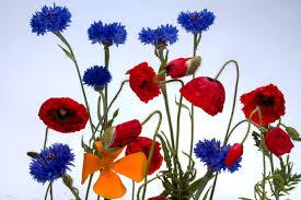 Images Gratuites Fleur P Tale Flore Fleur Sauvage