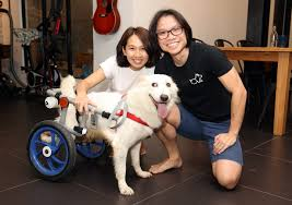 diy wheelchair gives disabled dogs a new lease on life options the edge
