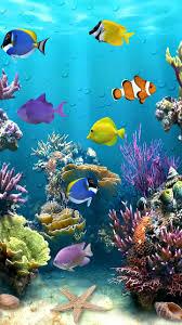 Beautiful Fish Tropical