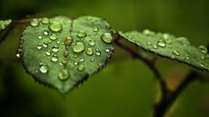 full hd 1080p water drop puter background id 430178 for free