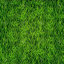 tall grass texture. Green Grass. Natural Background. Texture. Tall Fresh Spring Grass Texture S