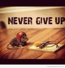 Never Give Up On Life Quotes Custom Funny Never Give Up Quote