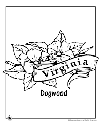 Small Picture Virginia State Flower Coloring Page Woo Jr Kids Activities