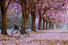 spring nature background hd.  Nature Spring Landscape Wallpaper With Nature Background Hd 0