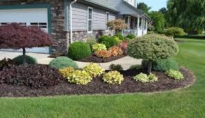 Plant Ideas For Backyard