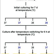 Yeast Temperature Chart Flow Chart For The Phase Transition Treatments M Mycelium