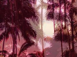 Photographic <b>Palm Tree</b> Placement <b>Print</b> by Elvira van Vredenburgh ...