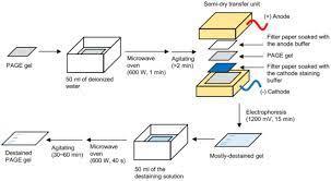 destaining of polyacrylamide gels