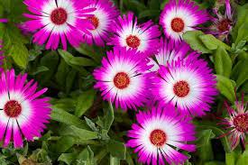 garden flowers. Bright Flowers Garden W