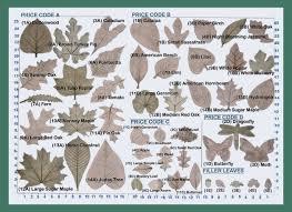 Identification Chart For Leaves Gorgeous Oak Leaf Identification Chart Plant Identification