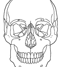 Day Of The Skeleton Coloring Page Free Printable Body And Skull ...