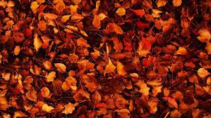 fall desktop backgrounds tumblr. Plain Desktop Autumn Wallpaper Tumblr 678235 In Fall Desktop Backgrounds Tumblr X