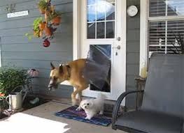 exterior doors with pet door installed. maxseal behemoth door model dog exterior doors with pet installed