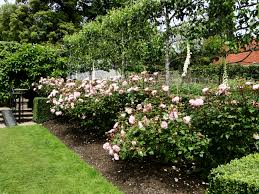 Image Result For Underplanting Citrus Trees In Pots  Citrus Underplanting Fruit Trees