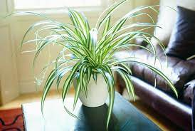 20 plants that are safe for children