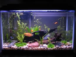 Bonsai Care Basics Gallon Freshwater Aquarium Jpg