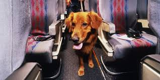 Emotional support animal real Laws Airline Requirements For Traveling With An Emotional Support Dog Esa Doctors Esa Doctors Airline Requirements For Traveling With An Emotional Support Dog